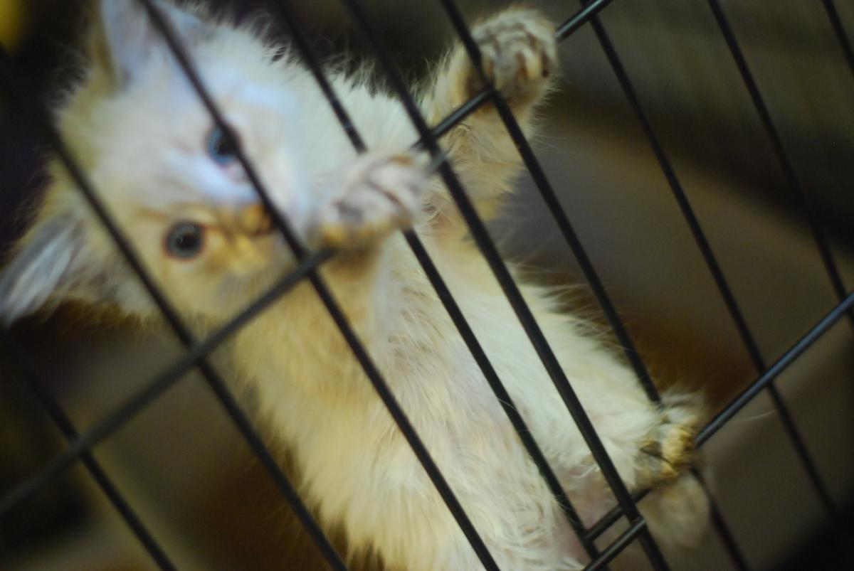 goathouse cat refuge:kitties