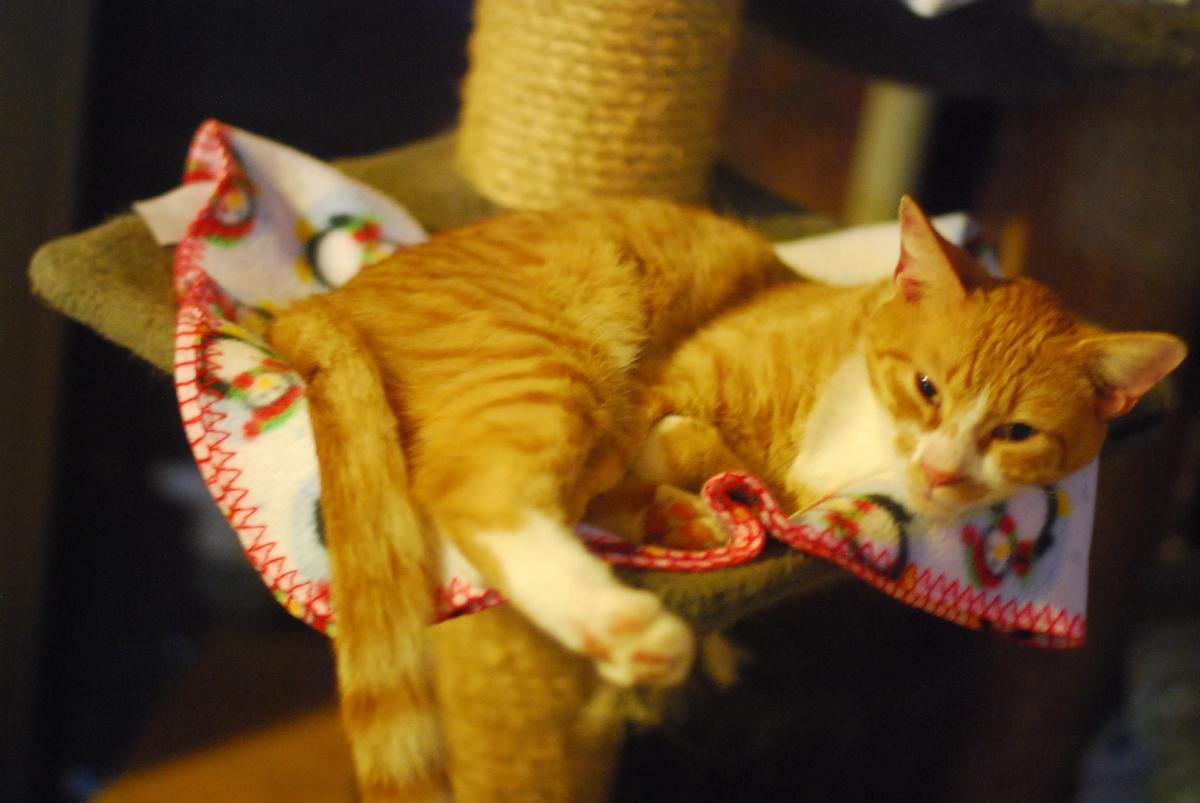 goathouse cat refuge: orangekitties