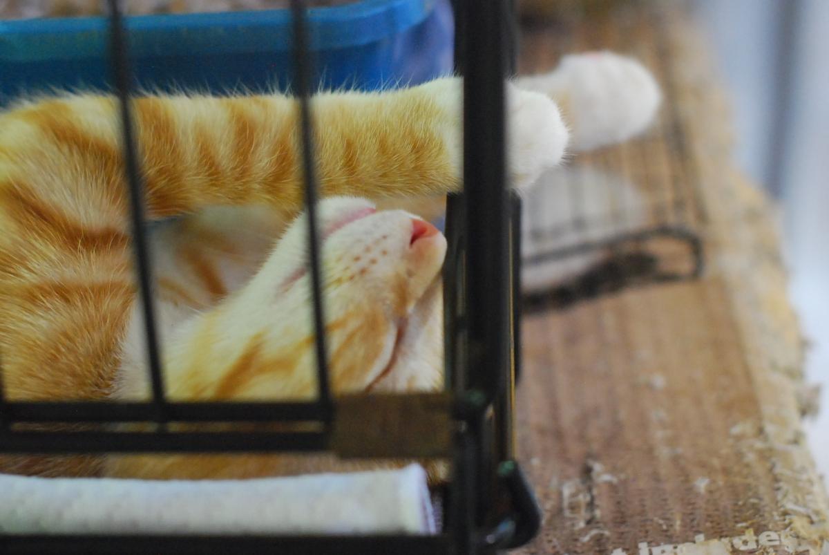 goathouse cat refuge: MONDAY HAPPYKITTIES