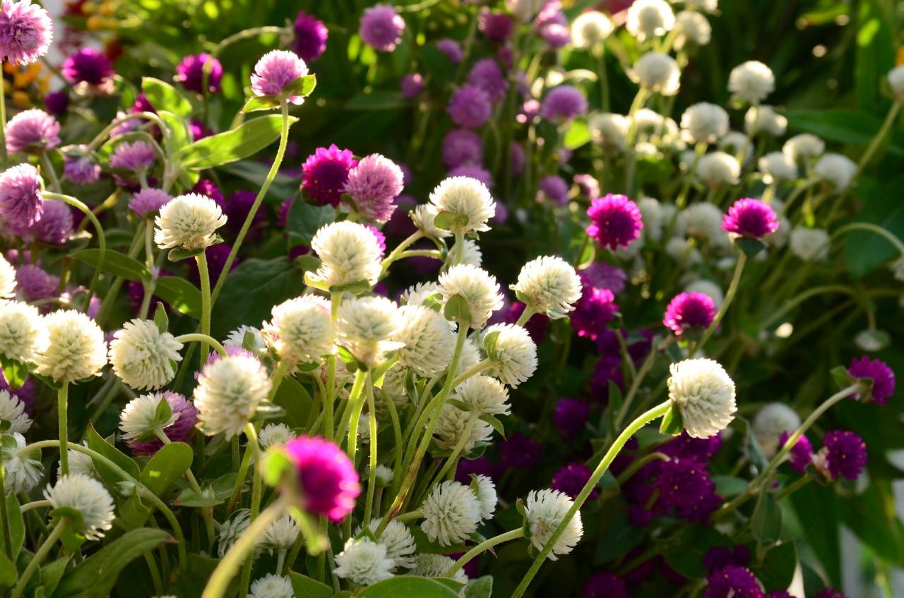 garden - 10